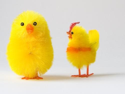 Chicken Talk