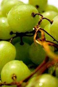 Fruit of Vine